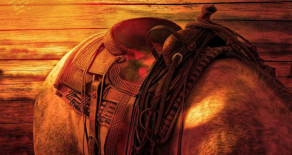 saddle on a horse's back